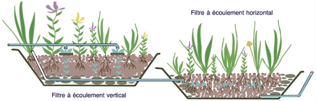 Fonctionnement Phytostation BlueSET - assainissement semi-collectif
